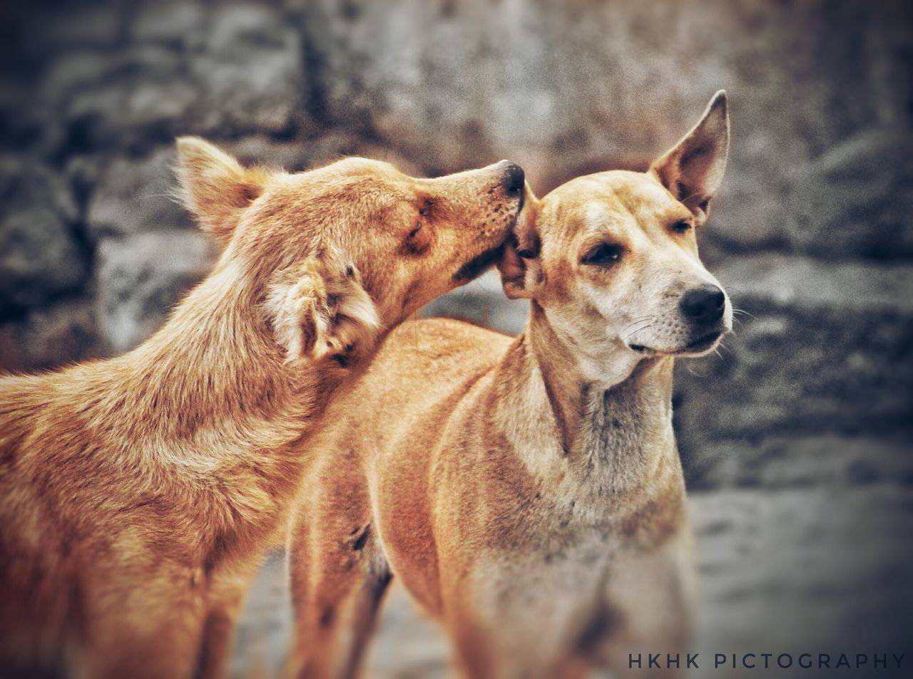 """Love"" is not only for Humans... It is common among each creature❤😍 Mammal Animal Themes Domestic Animals Nature Pets No People Dog Day Outdoors Close-up Love Common EyeEmNewHere"