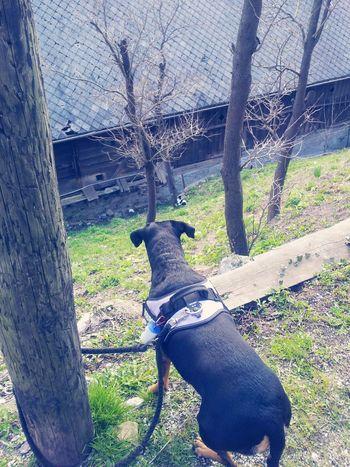 Shesawapussycat Hahaha Mybeauty I Love My Dog Loveher ♥♥
