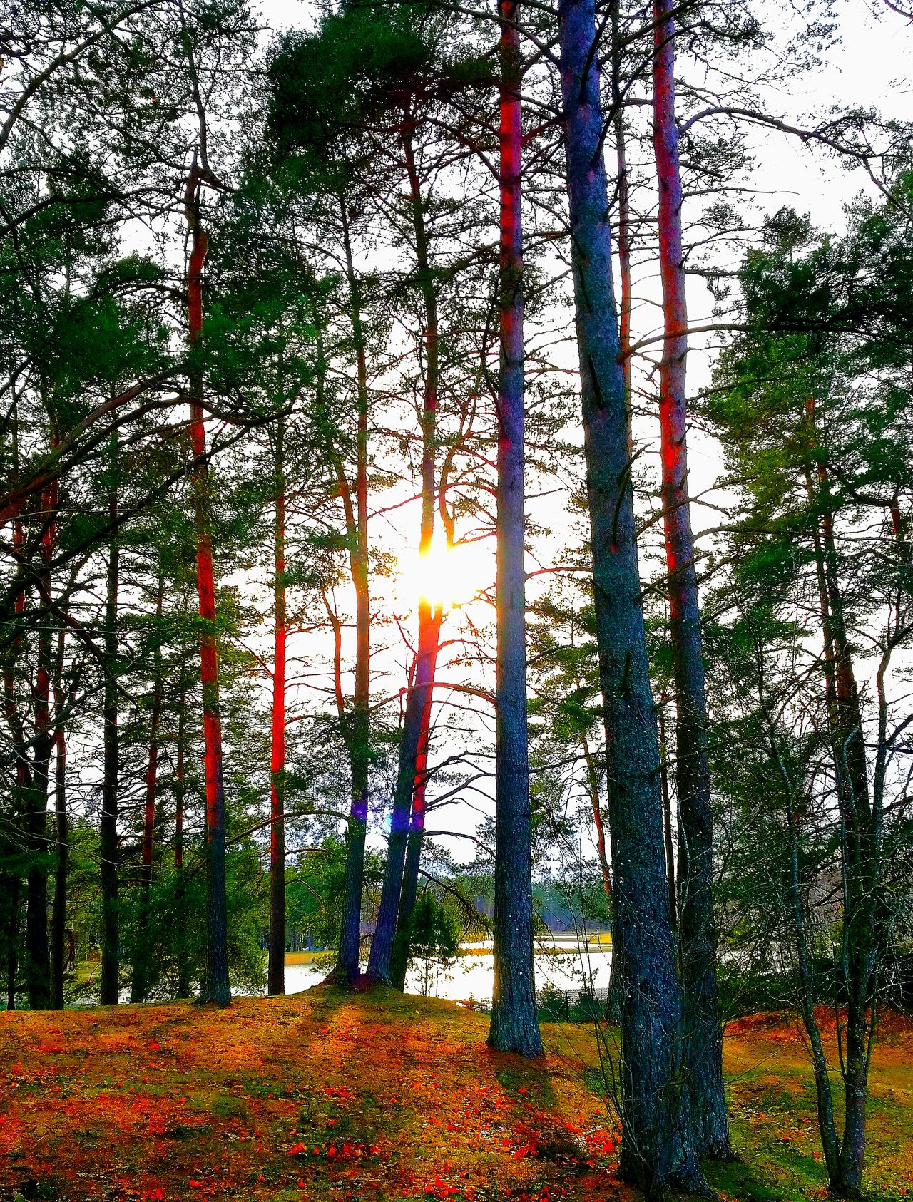 Tree Nature Sunset Sunset Colors Sunset✨trees✨ Sunset Photography My Park The Great Outdoors - 2017 EyeEm Awards