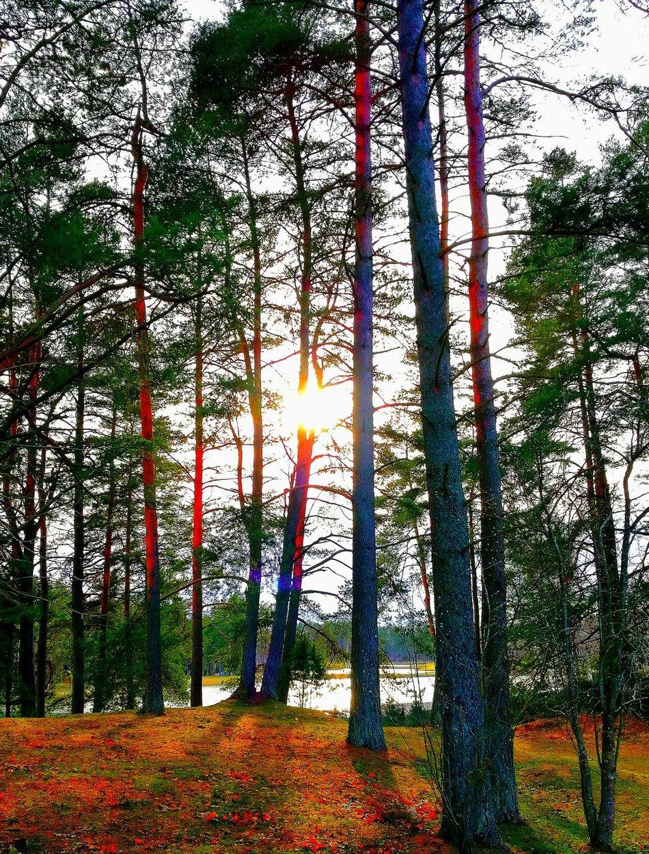 Tree Nature Sunset Sunset Colors Sunset✨trees✨ Sunset Photography My Park