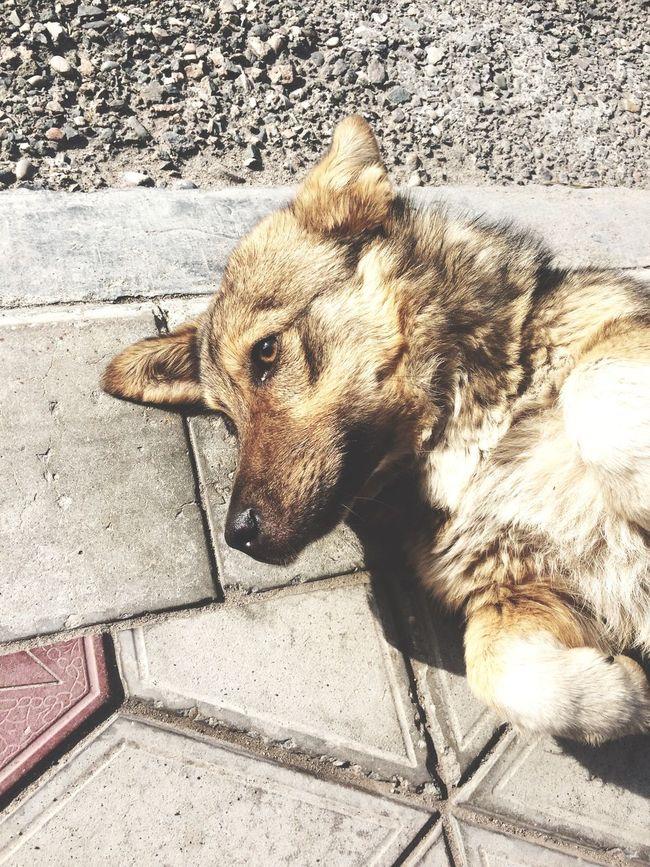 собака друг солнце доброта