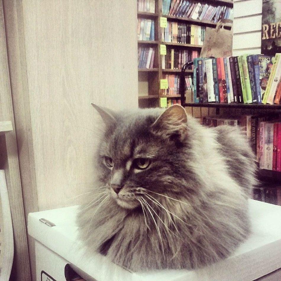 Fluffykitty MyTypeOfBookStore CatsAndBooks