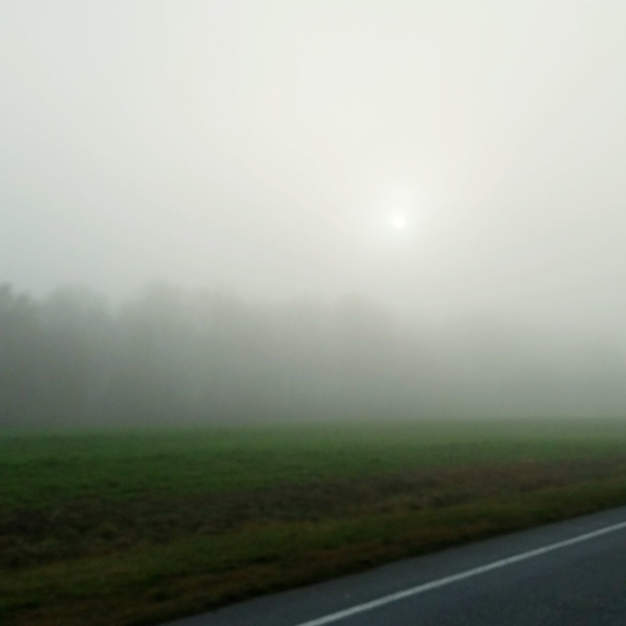 Foggy Field and Sun Fog Foggy Field Sun Driving NC Country Blur Green Road Dreary Weather Landscape Nature Tranquil Scene No People Field Scenics Tranquility Outdoors Grass Sky Minimalism Beauty In Nature