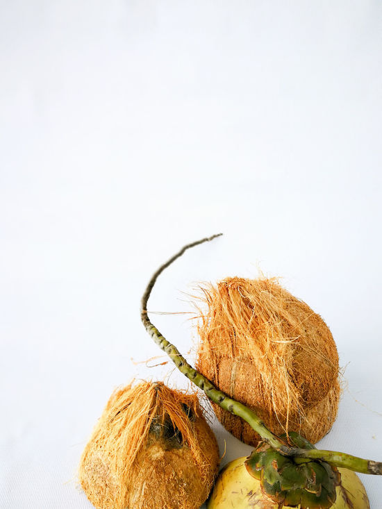 EyeEm Selects No People Close-up Nature Plant Pod Day White Background Outdoors Freshness Natural Coconut Oil Organic Food Organic Food Coconut Coconut Trees Coconuts Brown Hairy  Delicious Deepavali  White Isolated White Background Deepavali  Studio Shot