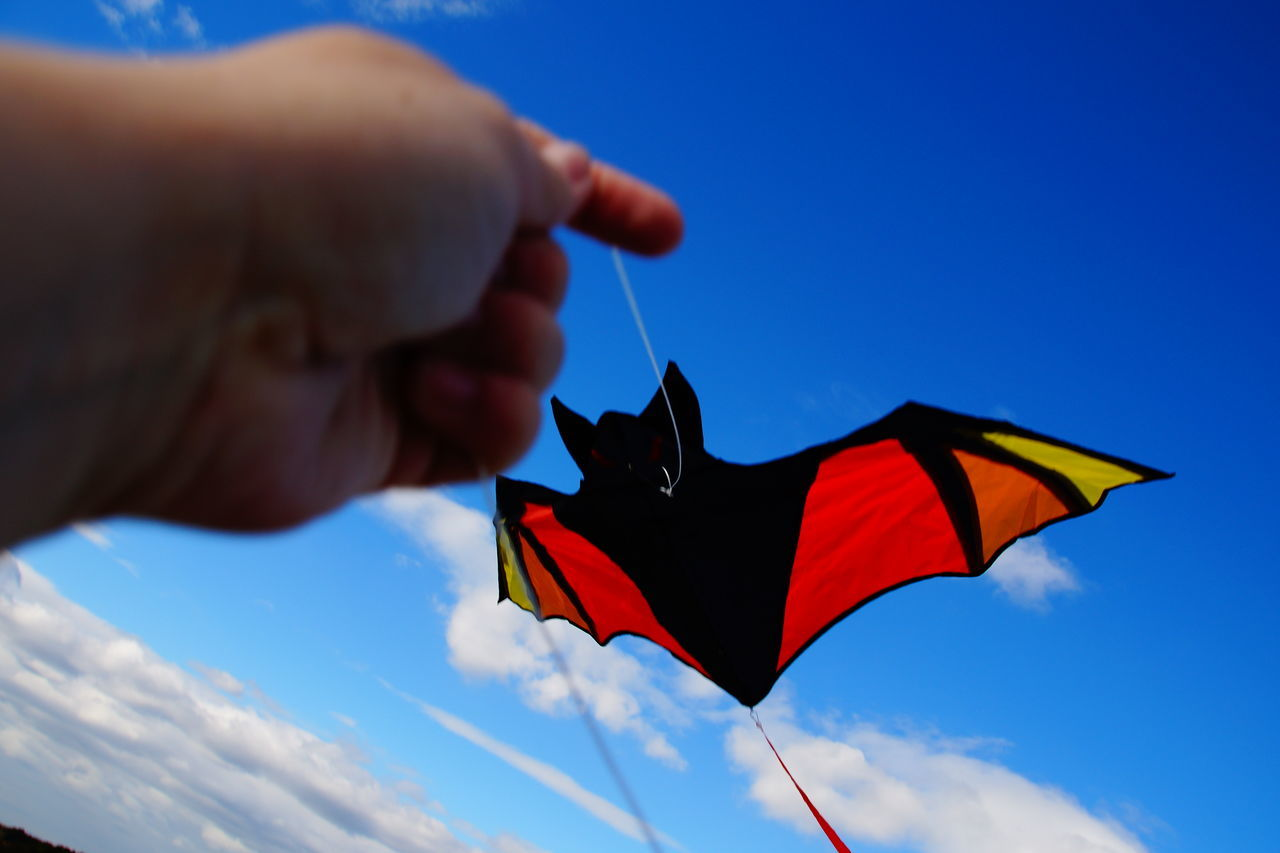 From My Point Of View Flying A Kite Blue Sky Bat