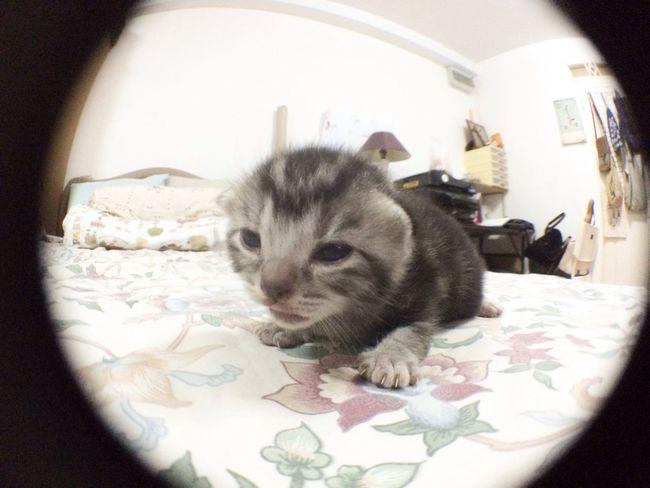 Little girl. So cute. Cat Kitten Cute Pets