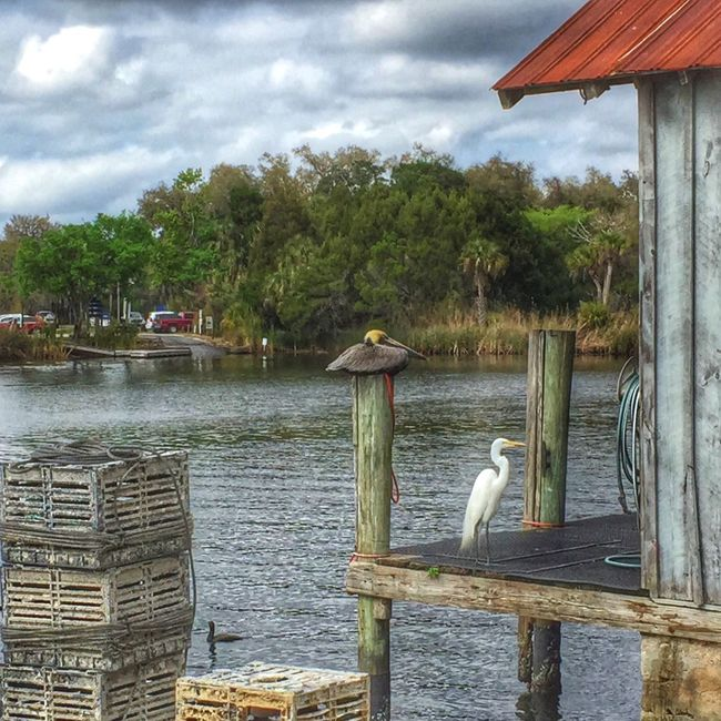 At the Fish Market in Florida Nature On Your Doorstep EyeEm Nature Lover EyeEm Best Shots Birds Traveling Landscape Nature Florida Fish Market