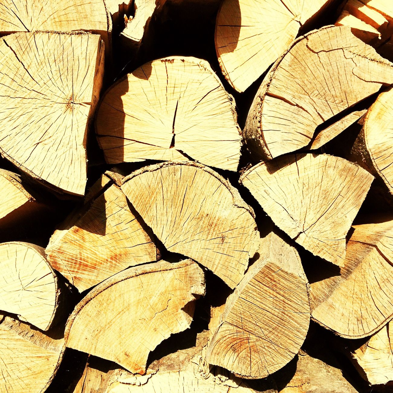 Color Palette дрова Forest