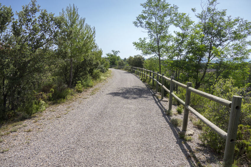 Barracas Castellón Clear Sky Day Nature No People Outdoors Road Sky The Way Forward Tree