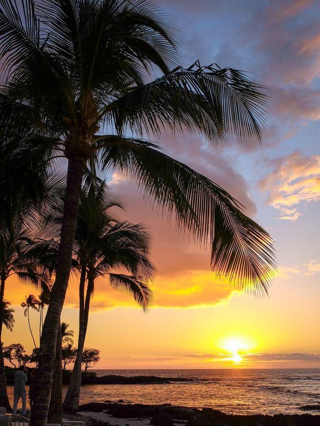 43 Golden Moments Sunset Tropical Palm Trees Hawaii Hawaiian Sunset Big Island