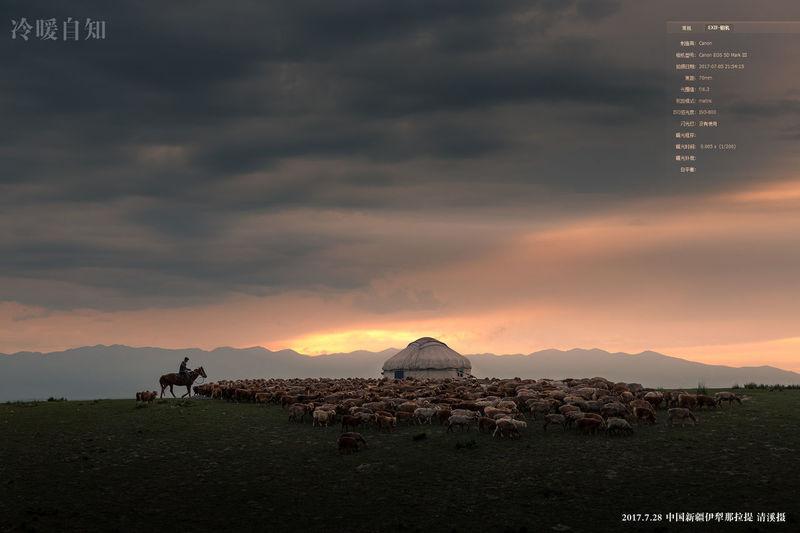 冷暖自知 新疆 Xinjiang Of CHINA 那拉提