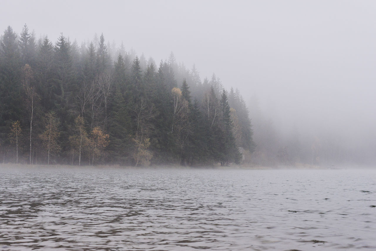 Beauty In Nature Cold Temperature Day Fog Forest Ice Lake Lake View Lakeshore Landscape Nature No People Outdoors Raining Raining Day Scenics Sky Tranquility Tree Tree Tree Trunk Trees Water Weather Winter