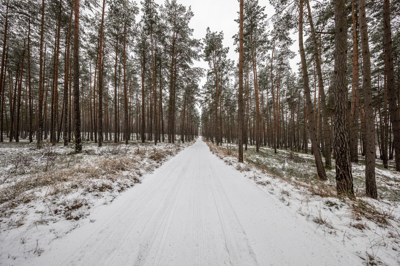 Bare Tree Cold Cold Temperature Deep In The Woods Forrest Road Snow The Way Forward Tree Winter Wood