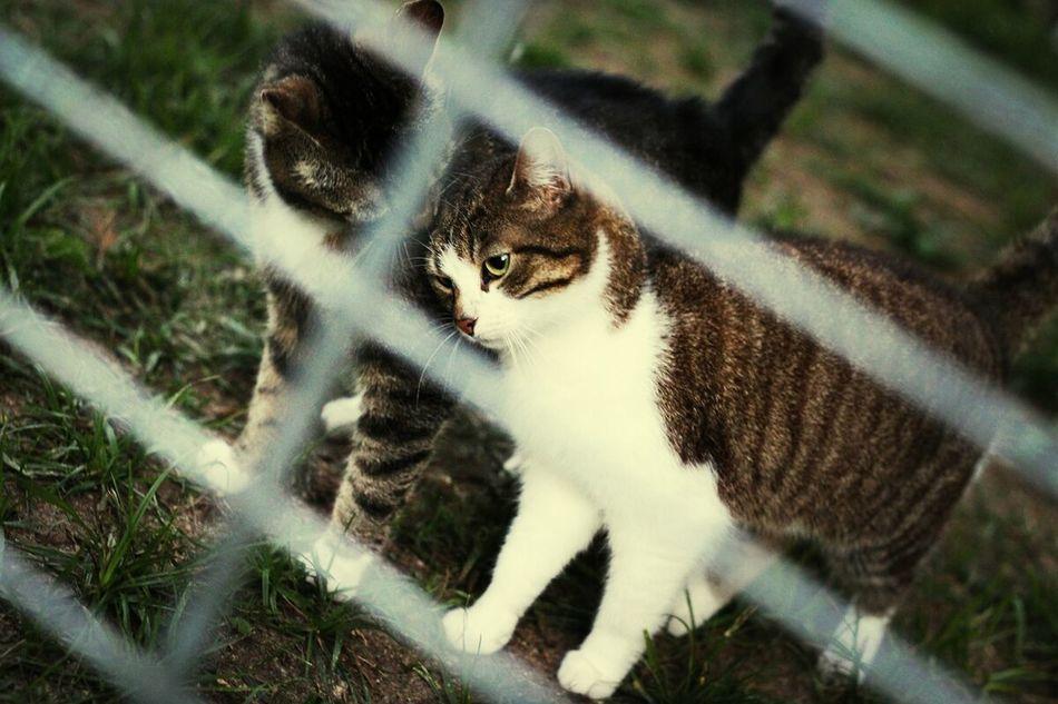 Cat Friendship Cute Tierheimamsee
