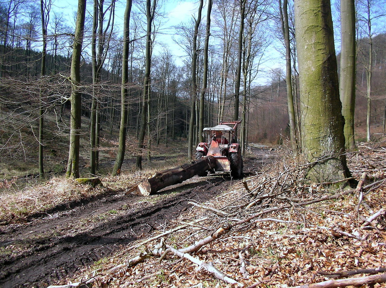 Beech Forest Brennholz Composition Day Forest Frühling Holz Schleppen Maschinenarbeit Outdoors Perspective The Way Forward Traktor Tree Wood Wood Wood - Material