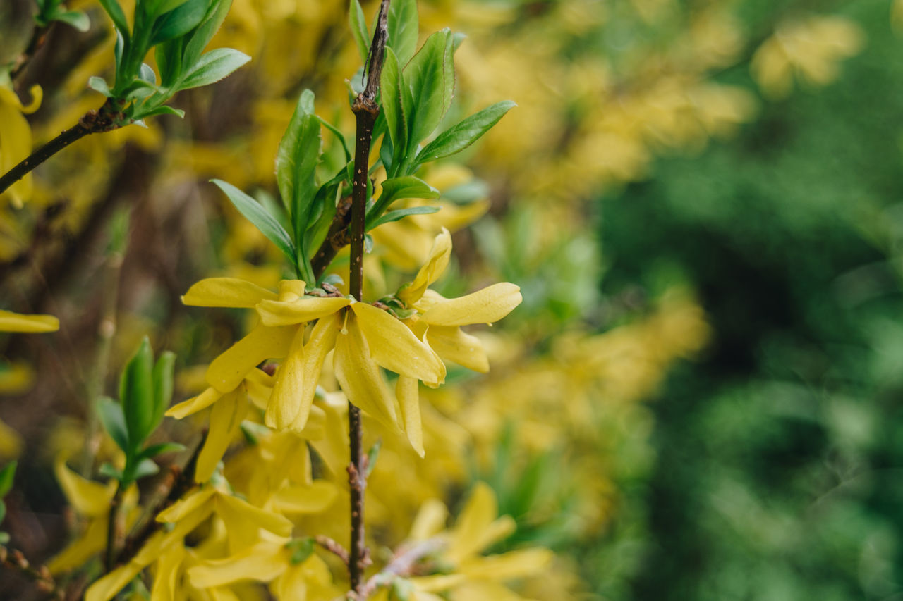 Growth Nature Yellow Plant Flower Close-up No People Beauty In Nature Outdoors Flower Head Fragility Day Freshness Bokeh