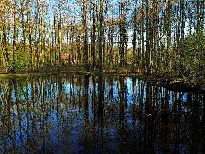 Lake Tree Spring