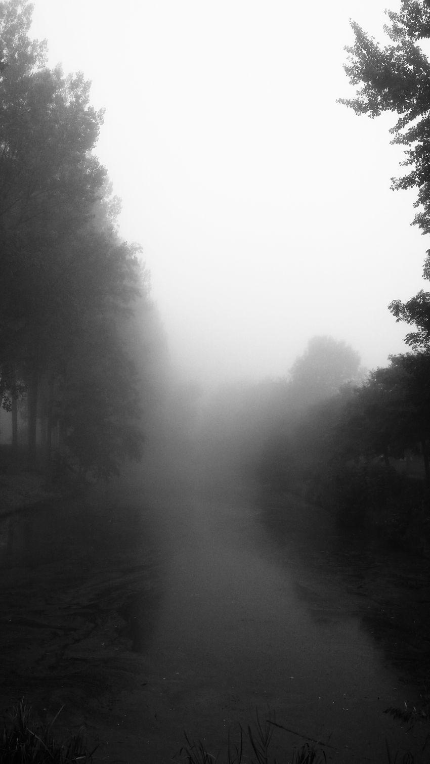 Fog Mist Herfst...? Autumn