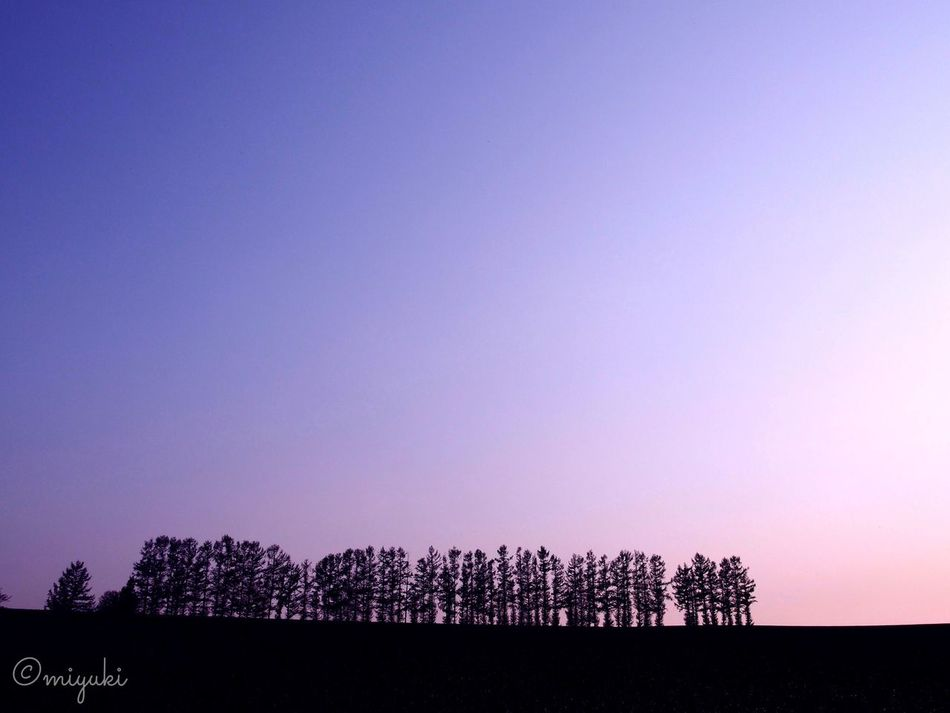 美瑛、セブンスターの丘。Seven-star Hills at Biei-cho in Hokkaido. Trees Hills Dusk EyeEm Nature Lover EyeEm Best Shots Hokkaido Silhouette
