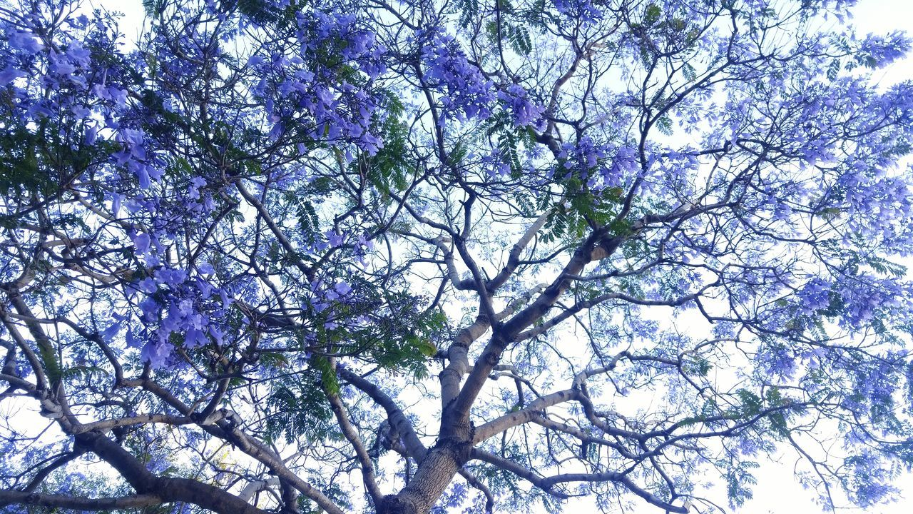 tree, branch, nature, beauty in nature, low angle view, growth, flower, no people, fragility, springtime, outdoors, freshness, day, sky