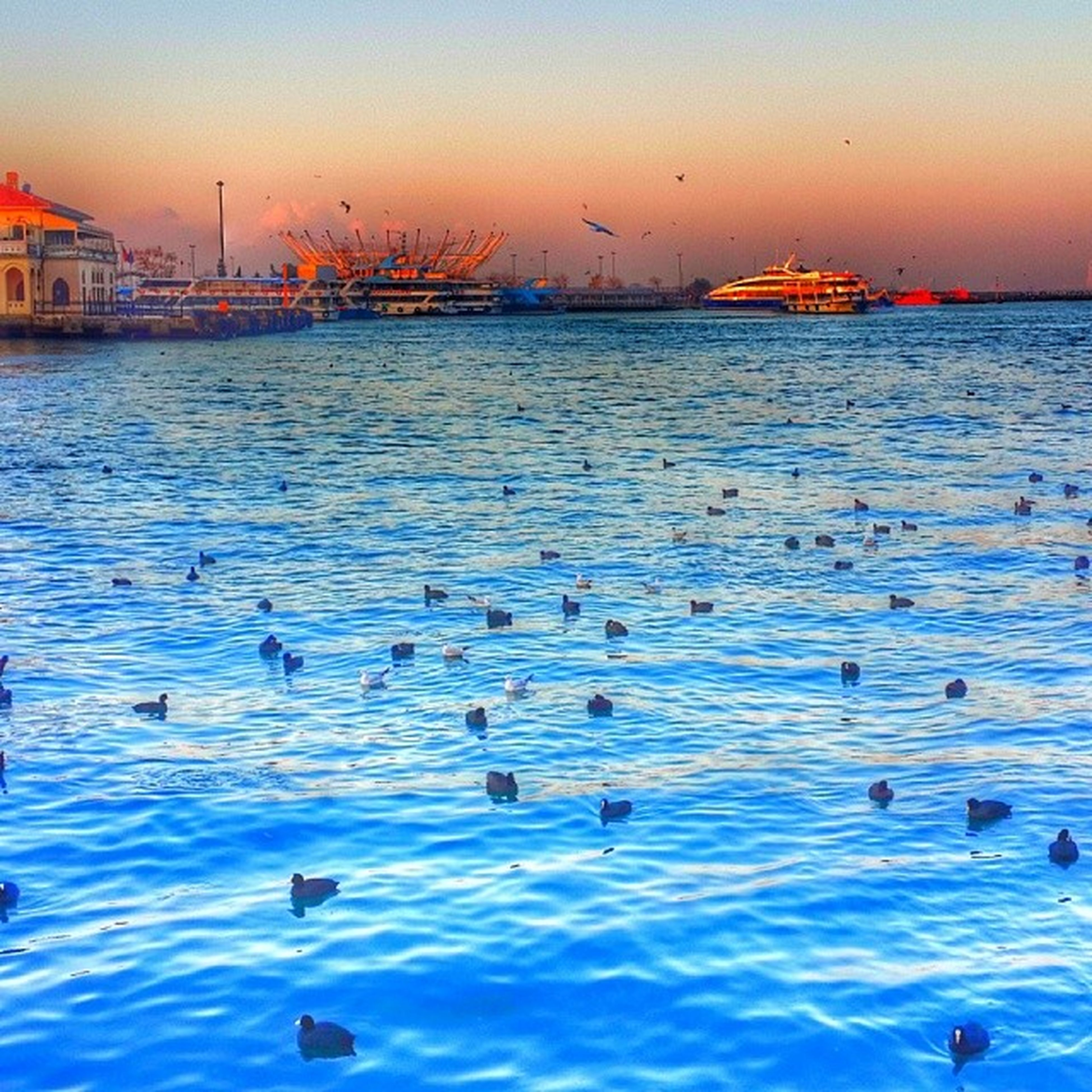 water, bird, sunset, animal themes, animals in the wild, sea, wildlife, waterfront, sky, rippled, harbor, nature, nautical vessel, built structure, flock of birds, beauty in nature, swimming, architecture, scenics