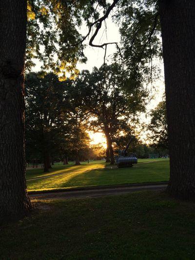 Sunlight Park Trees