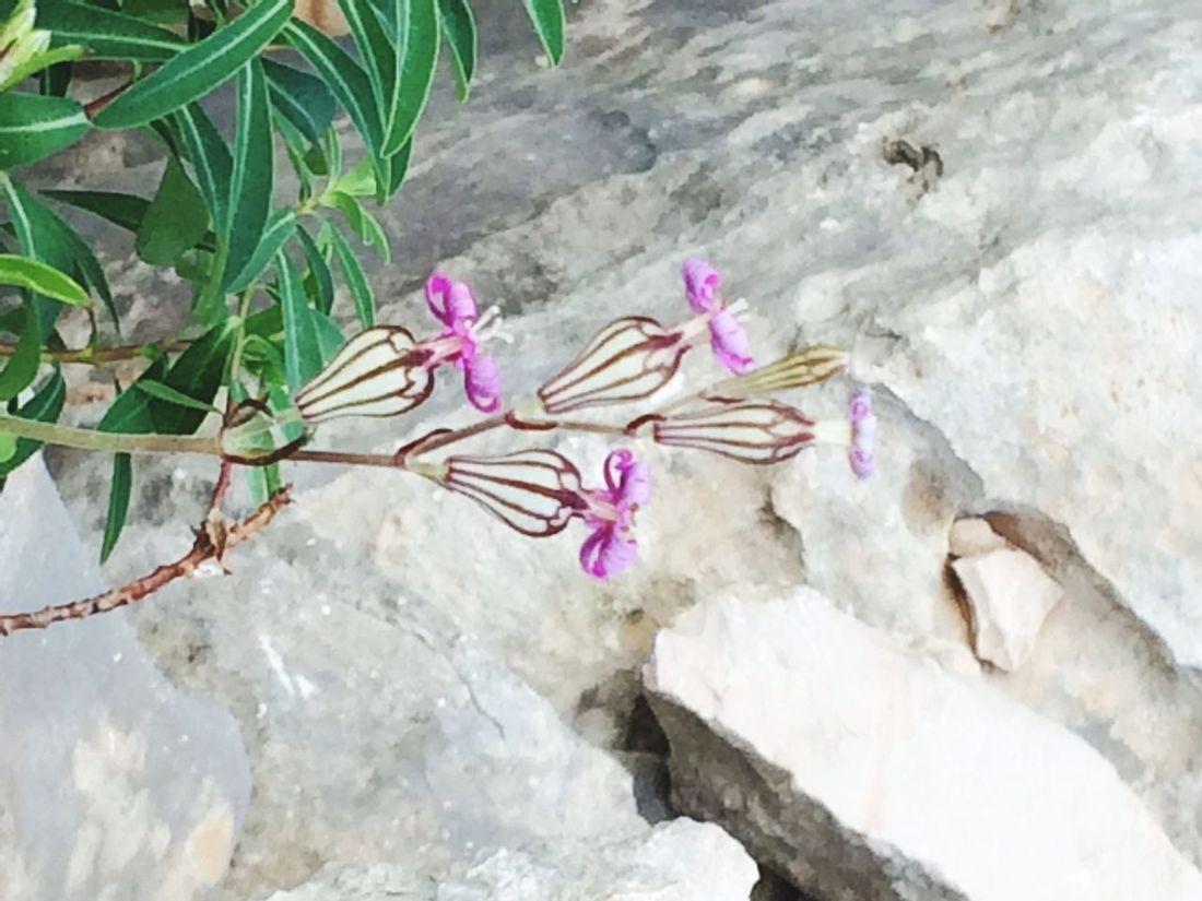 Flore du Montgo