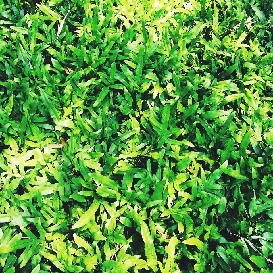 Green Color Leaf Growth Plant Nature Full Frame Day No People Outdoors Herb Freshness Close-up