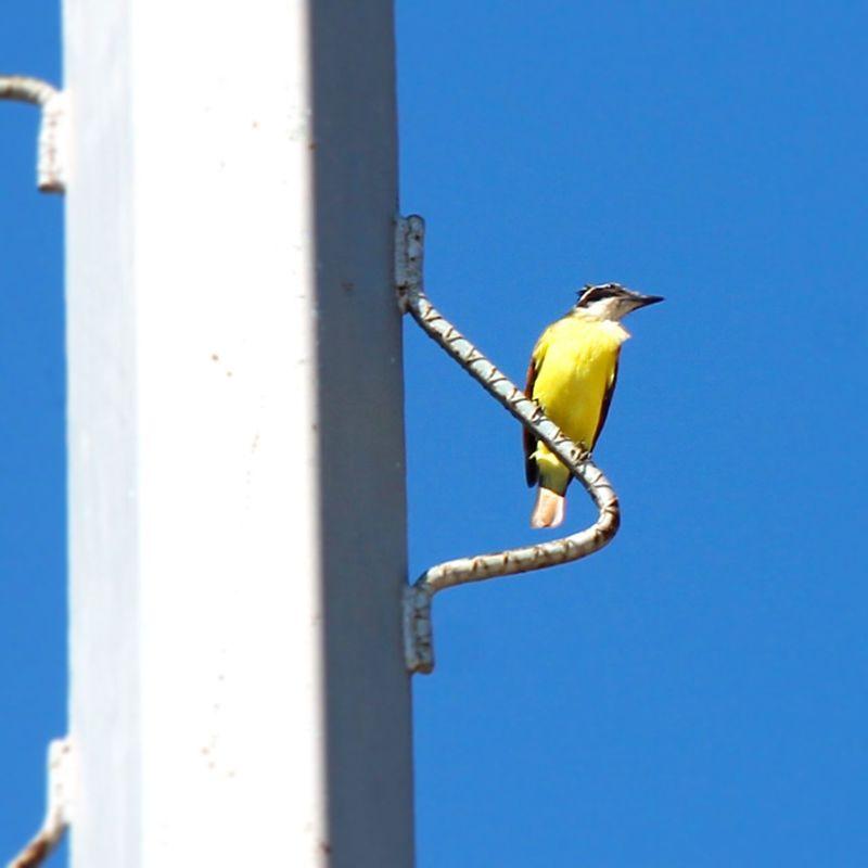 Bird Flyingfree Nature Free