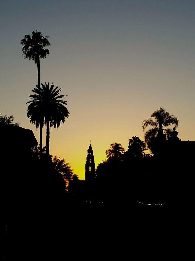 San Diego First Eyeem Photo Balboa Park San Diego Sunset Silhouettes Balboa Park Sunset Orange Sunset Silhouette Palm Tree Silhouette Sunset California taken with Galaxy S5