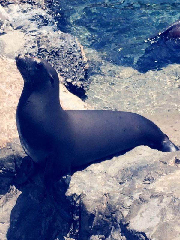 Sea Lion Water Sea Animal Blue Vintage 4 Filter Beautiful America Sea World Orlando