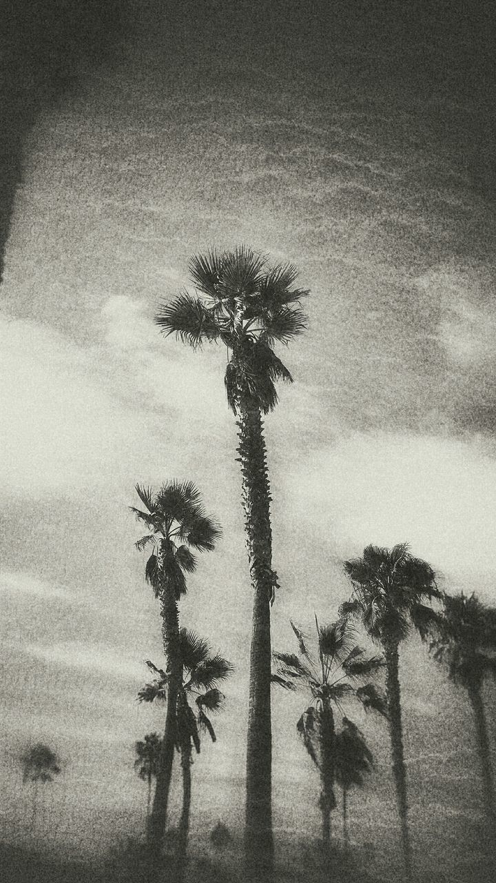 palm tree, growth, nature, tree, outdoors, no people, field, day, beauty in nature, plant, sky