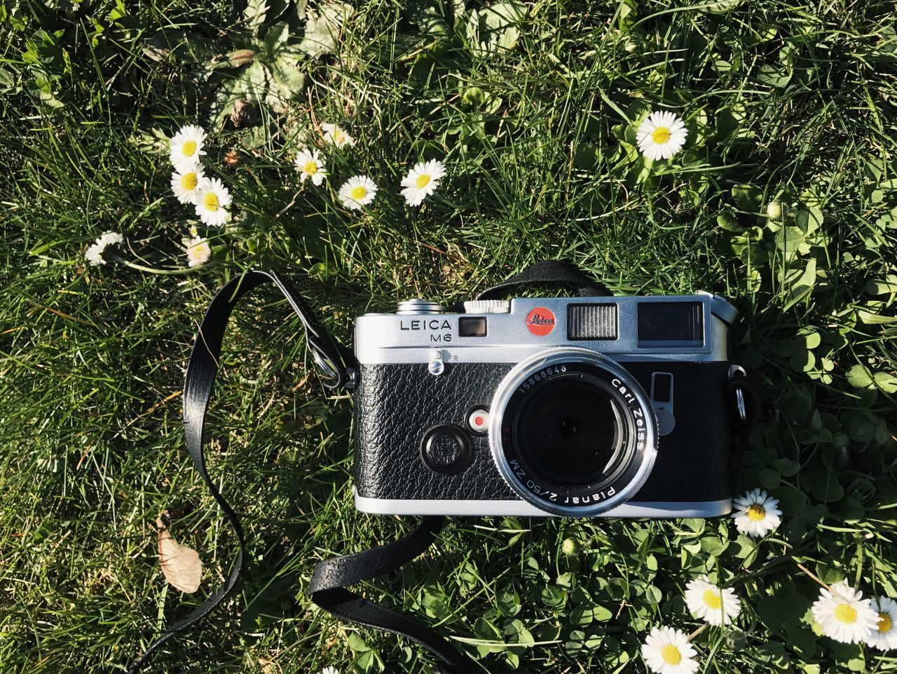 Love at first sight Photography Themes Camera - Photographic Equipment Old-fashioned Flower Nature Outdoors Film 35mm Leicam6 Leica Film Camera Film Photography Vscocam Snapseed Love CarlZeiss Kodak EyeEmNewHere