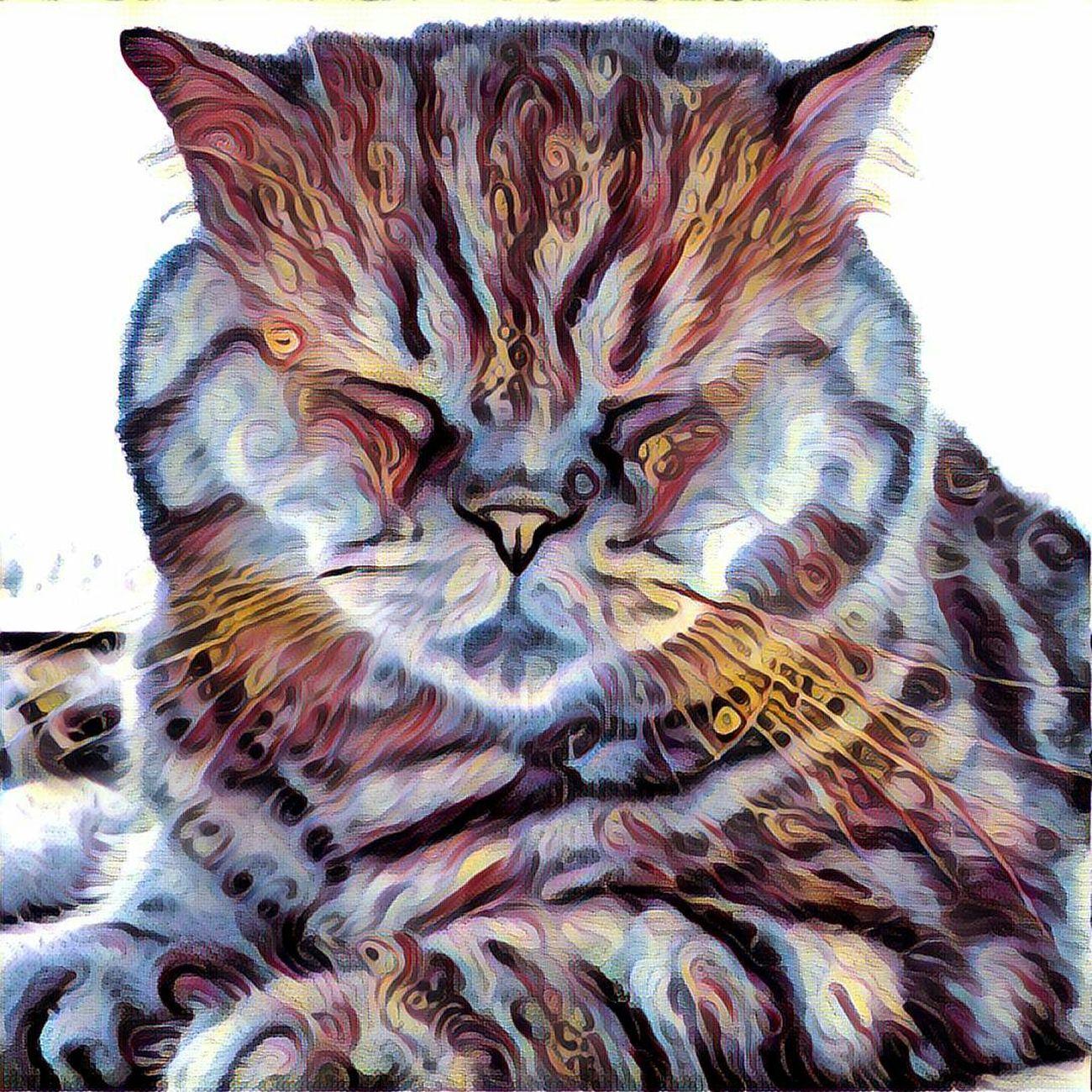 Почти амурский тигр Prisma Prismacolor Prisma Art Cat Cats