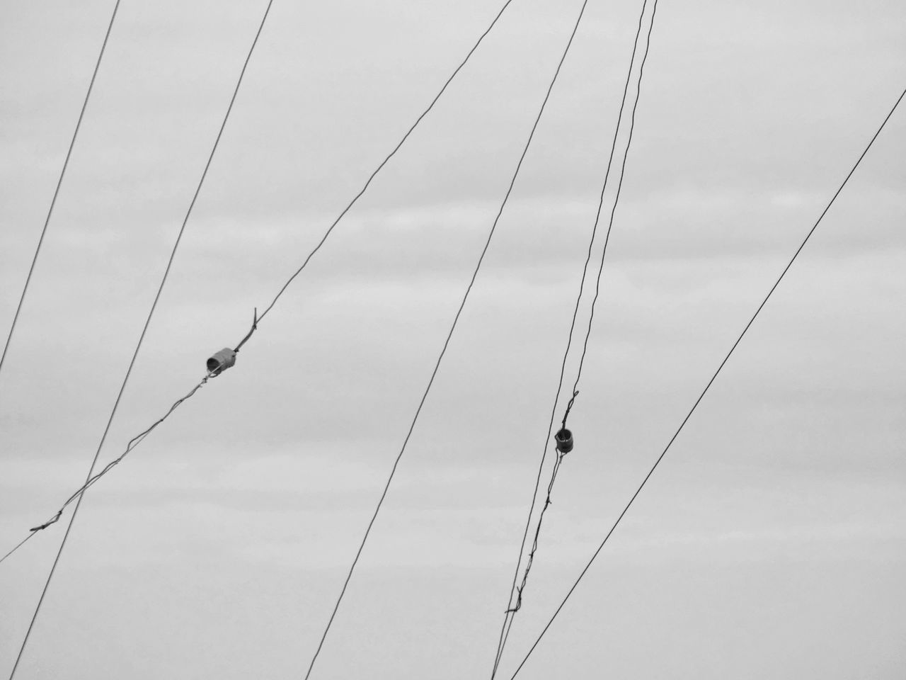 cable, bird, animals in the wild, low angle view, animal themes, power line, animal wildlife, one animal, day, perching, outdoors, power supply, electricity, sky, nature, telephone line, no people