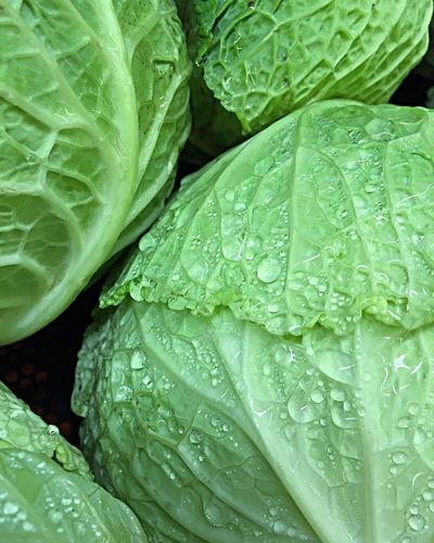 Cabbage anyone? Wet Drop Leaf Close-up Freshness Plant Green Color Fragility Nature Full Frame Selective Focus Vegetables Salad Produce Produce Market Produce Display Backgrounds