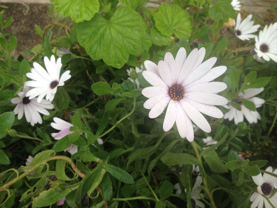Easter Flower Fragility Petal Growth Plant White Color Beauty In Nature Freshness