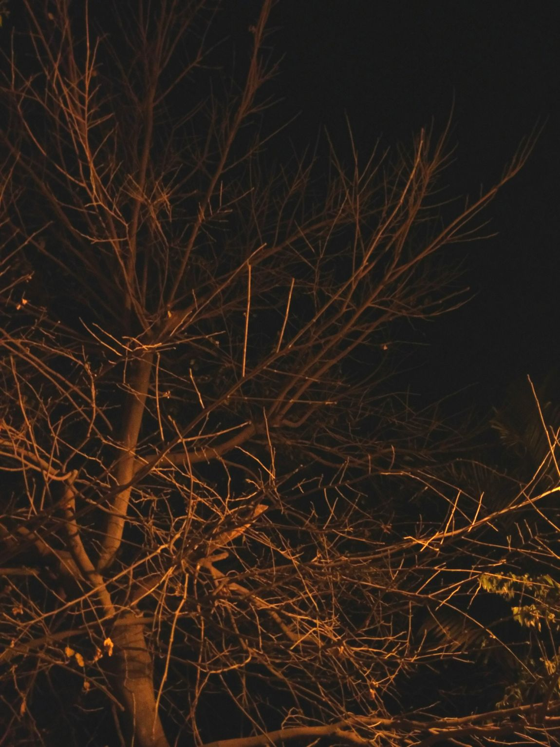 Withered to be born again Withered Tree Naked Bare Tree Street Lights Shadows Draw Against Black Dark Background Minimal Simple Beauty Bare Beauty Night Lights Night Photography Just Enough Composition EyeEm Gallery