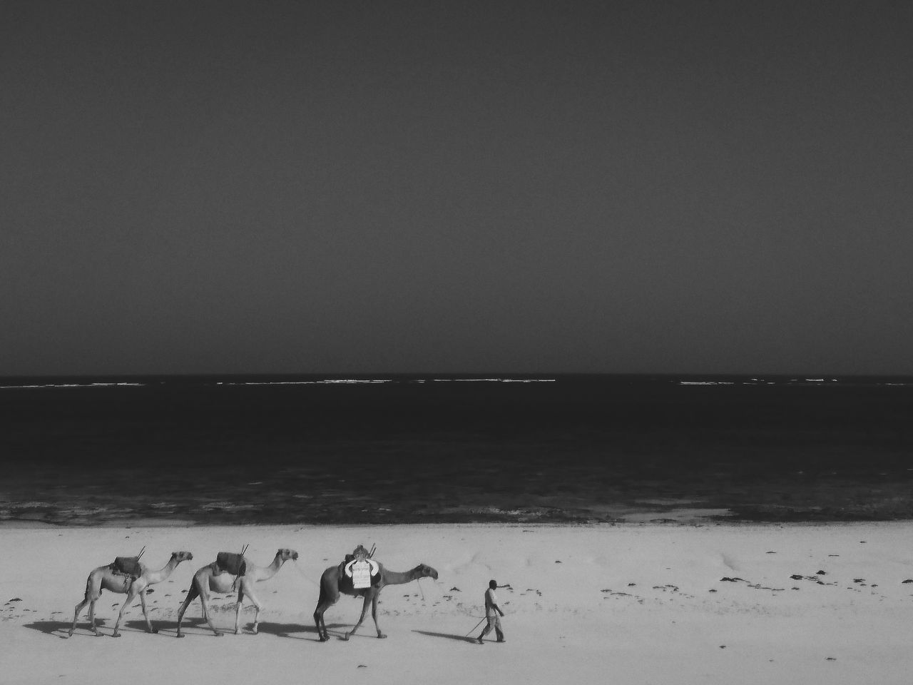 Diani Beach, Ukunda, Kenya. Animal Themes Animals In The Wild Animal Nature Beauty In Nature Camels Indian Ocean Ocean View Minimalism Minimal Landscape Adventure EyeEm Best Edits Beach Africa Animals Travel Destinations Kenya VSCO EyeEm Best Shots The Great Outdoors - 2017 EyeEm Awards