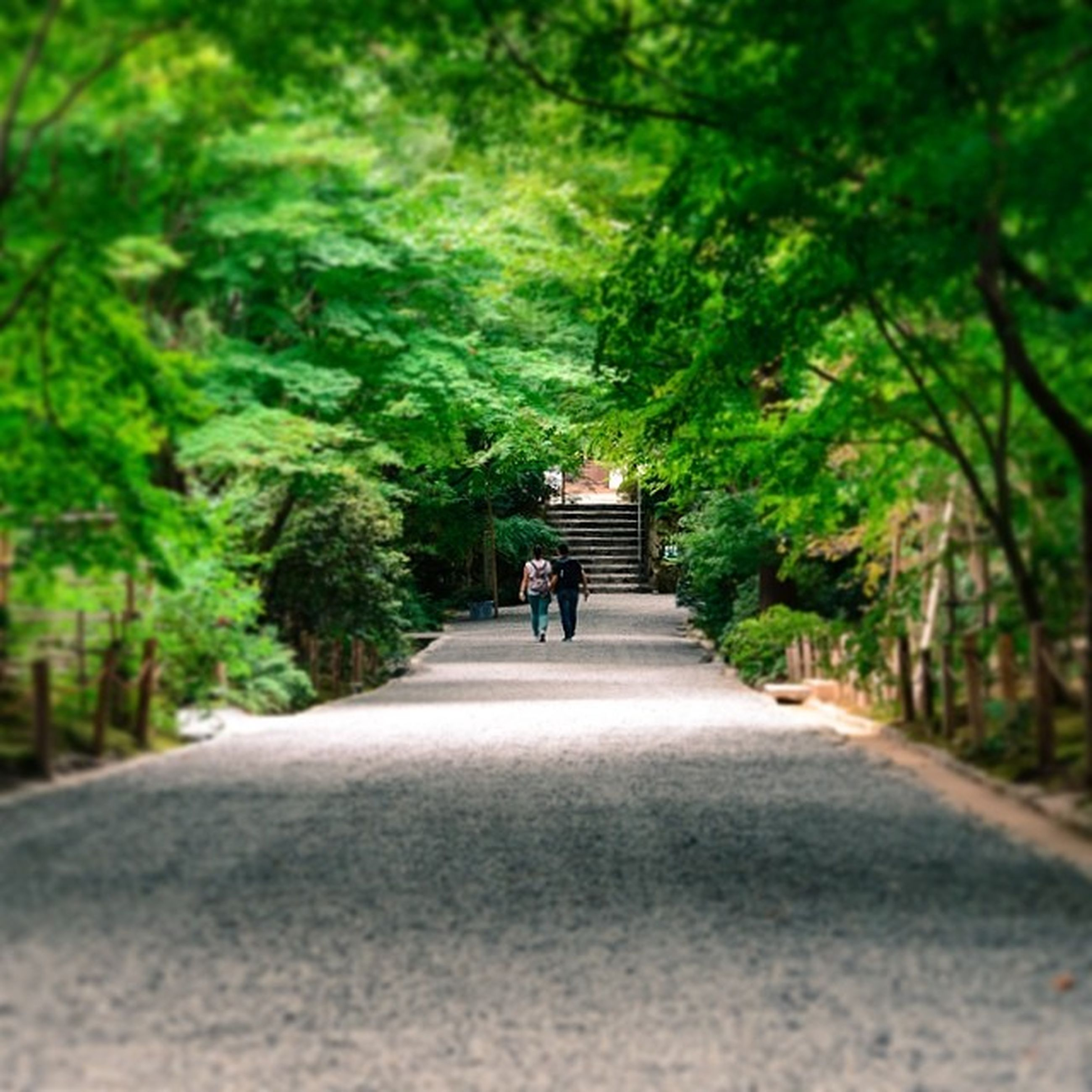 tree, the way forward, transportation, walking, rear view, full length, road, men, lifestyles, leisure activity, diminishing perspective, growth, on the move, street, person, bicycle, green color, day