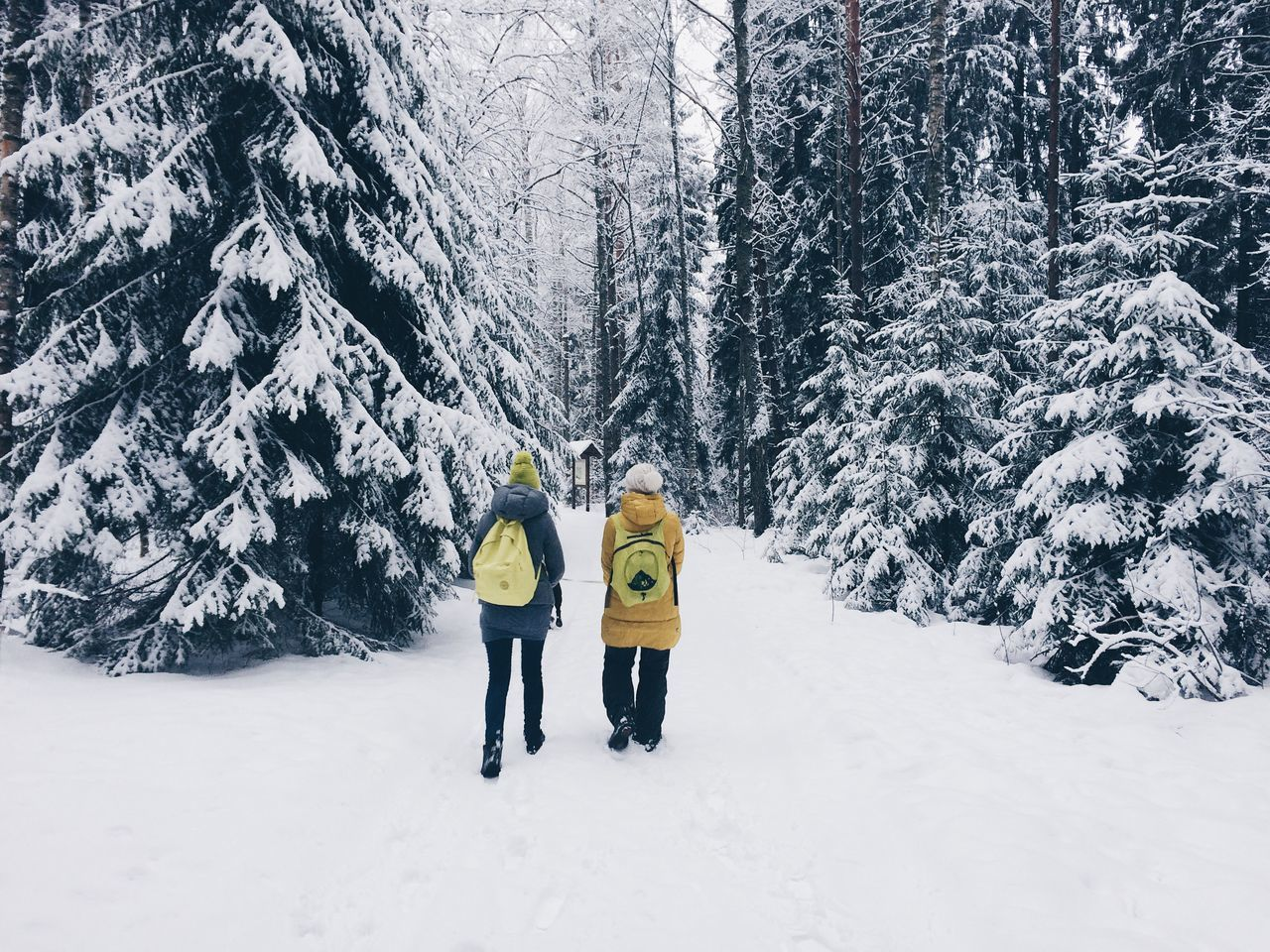 Adult Adults Only Beauty In Nature Cold Temperature Day Forest Friendship Leisure Activity Mature Adult Mountain Nature Only Men Outdoors People Scenics Ski Holiday Snow Togetherness Tree Two People Warm Clothing Winter Winter Sport Young Adult
