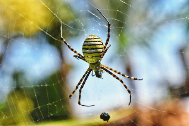Beauty In Nature Formal Garden Green Green Color Blurry Background Nikon Photography NIKON D5300 Egypt Animals In The Wild Complexity Zoology Day Outdoors Nature Full Frame Focus On Foreground Spider Spider Web Natural Pattern Close-up Insect Plant Wildlife Backgrounds Web