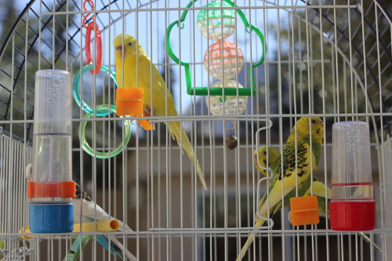 Beautiful stock photos of pflanzen, Captivity, animal Themes, bird, birdcage
