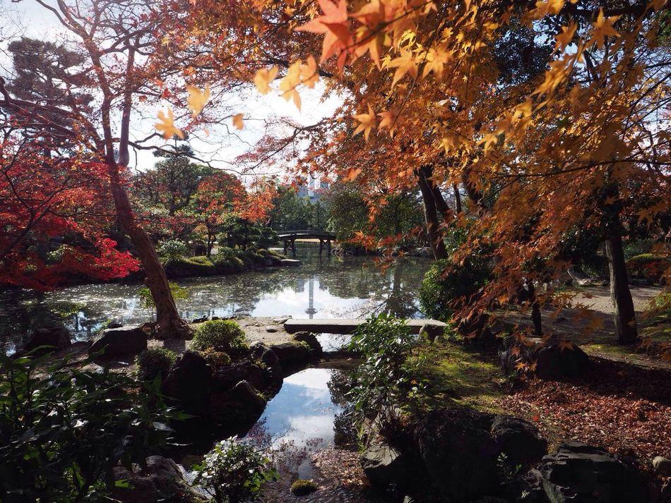 Kyoto Japan Sho-seien Higashihonganji Shinsetsu-kyo Autumn Autumn Colors Pond Reflection Kyoto Tower Olympus PEN-F 京都 日本 渉成園 東本願寺 侵雪橋 京都タワー 反射 紅葉 池 秋