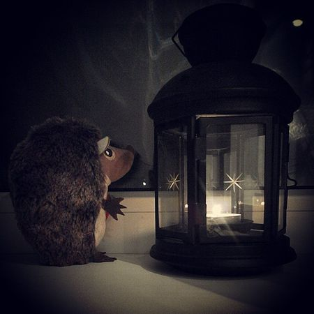 ежик сказка фонарь Hedgehog Fairytale  Lantern Toystory