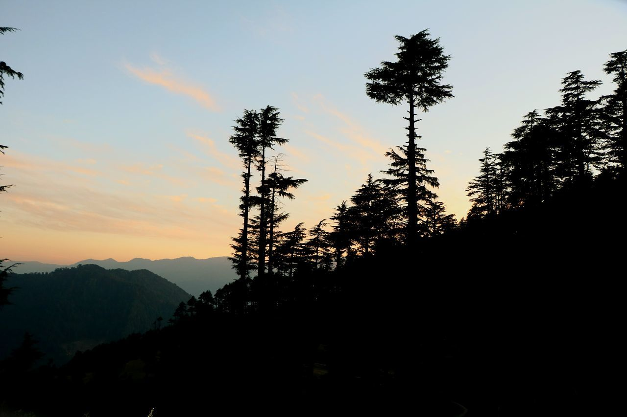 Tree Sunset Travel Silhouette Sky Nature Landscape Outdoors Beauty In Nature Day Kashmirdiaries Kashmir Kashmir , India Kashmir Beauty Patnitop_hills Patnitop Patnitophills