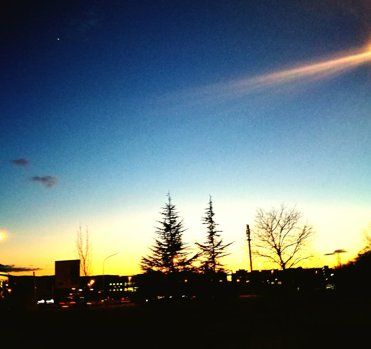 Real treee and fake tree City Sunset Silhouettes