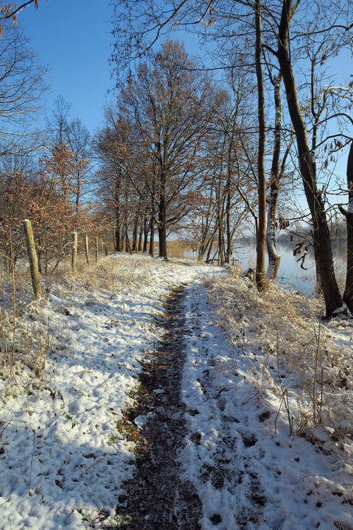 path along Havel river landscape at winter. Havelland, Germany Snow ❄ Snow Willow Tree Hohennauen Brandenburg Havelland Germany Havel Havel River Wintertime Riverscape Landscape River View River Winter Footpath Path