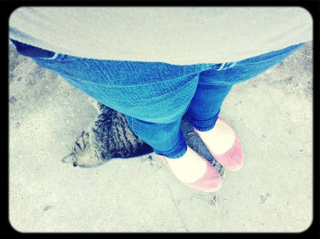 Goodmorning Todays Outfit! OldCat Tiger.