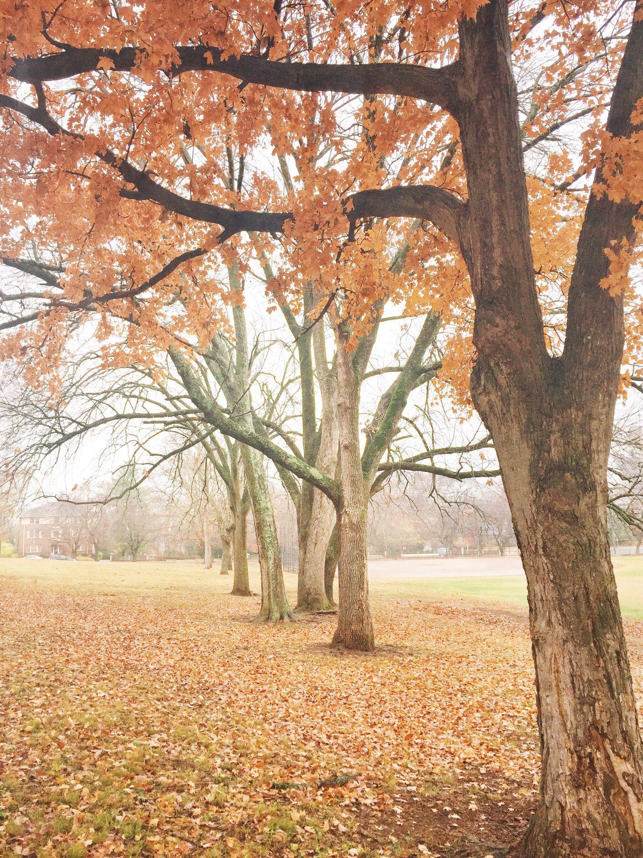 Tranquility Tranquil Scene Autumn Elmington Park Nashville